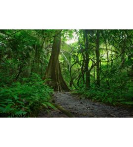 Jungle Forest Scenic Background Wall Mural Wall art Wall decor