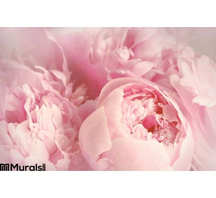 Closeup Peony Flowers Wall Mural Wall art Wall decor