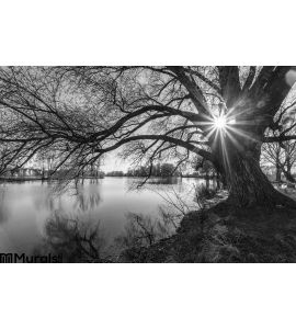 Black White Tree Silhouette Sunrise Time Wall Mural