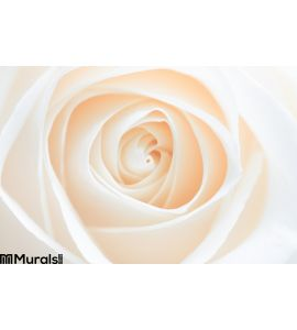 Rose abstract Wall Mural