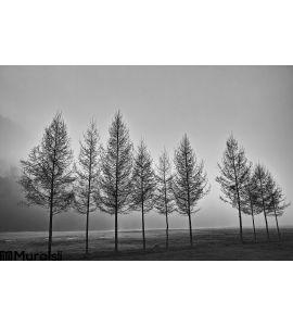 Row Trees Black White Wall Mural