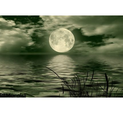 Full Moon Wall Mural Wall art Wall decor