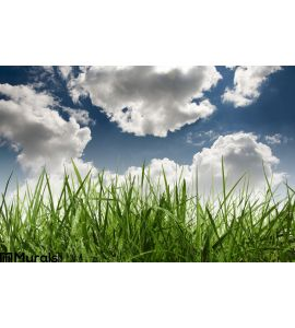 Grass Sky Wall Mural Wall art Wall decor
