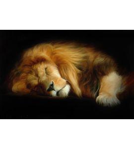Sleep Lion Wall Mural