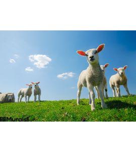 Cute Lambs Spring Wall Mural Wall art Wall decor