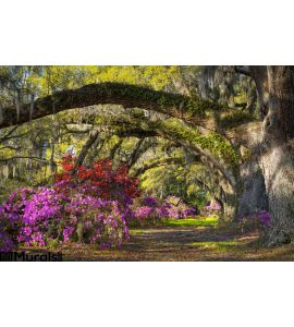 Charleston Sc Spring Bloom Azalea Flowers South Carolina Plantation Garden Wall Mural
