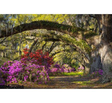 Charleston Sc Spring Bloom Azalea Flowers South Carolina Plantation Garden Wall Mural Wall art Wall decor
