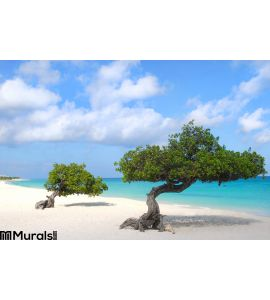 Divi Divi Trees Eagle Beach Aruba Wall Mural