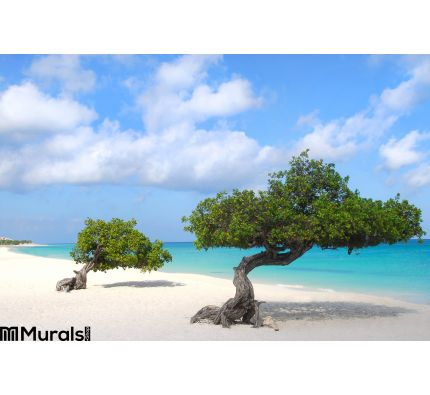 Divi Divi Trees Eagle Beach Aruba Wall Mural Wall art Wall decor