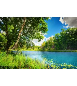 Clean lake in green spring summer forest Wall Mural Wall art Wall decor