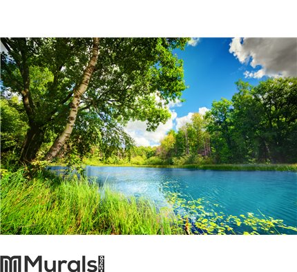 Clean lake in green spring summer forest Wall Mural