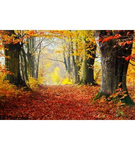 Autumn Fall Forest Path Red Leaves Towards Light Wall Mural