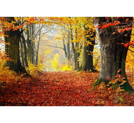 Autumn Fall Forest Path Red Leaves Towards Light Wall Mural Wall art Wall decor