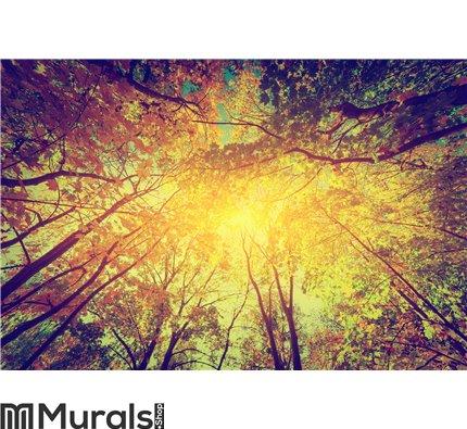 Autumn, fall trees. Sun shining through colorful Wall Mural Wall art Wall decor