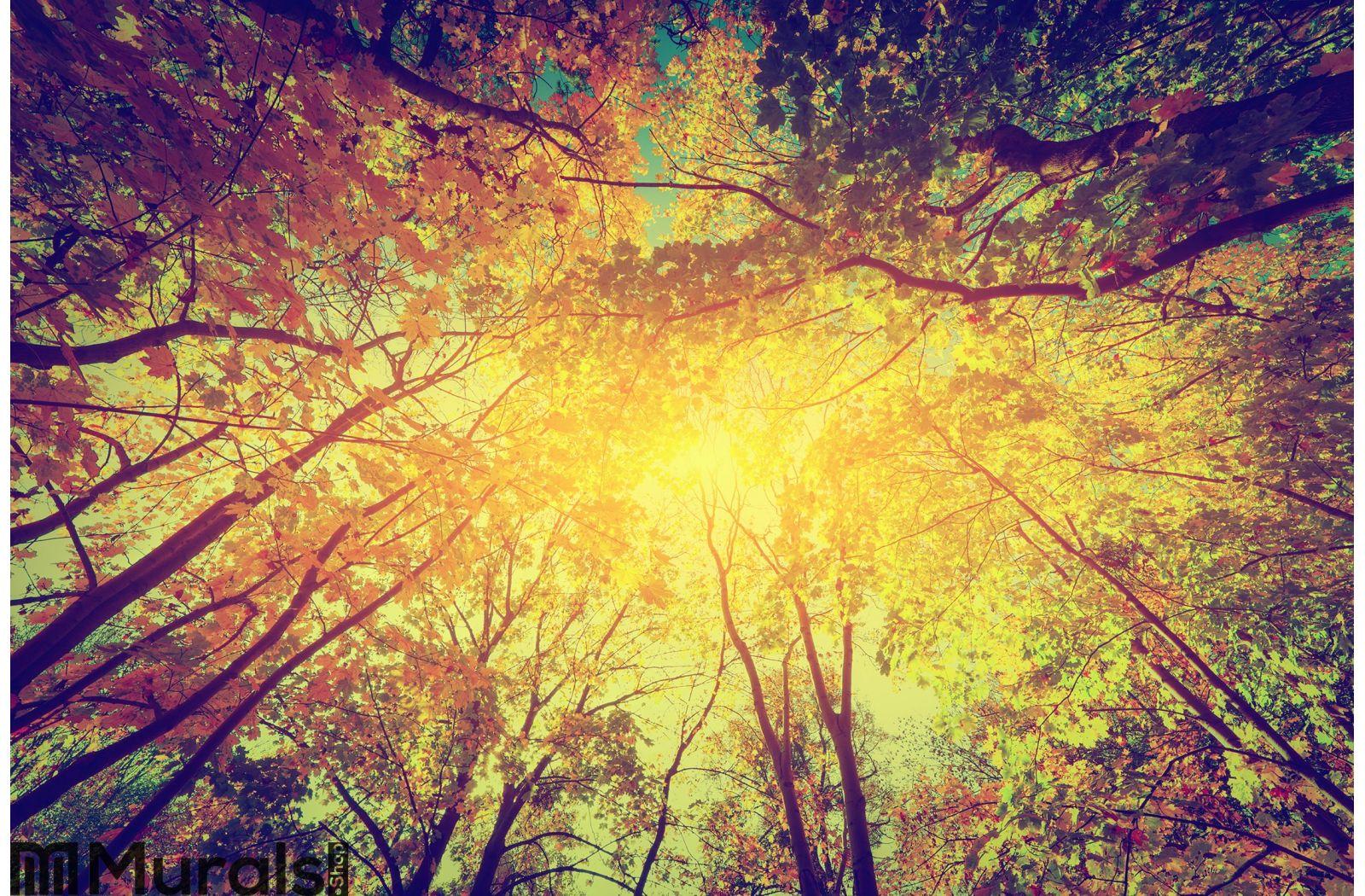 Autumn, fall trees. Sun shining through colorful Wall Mural