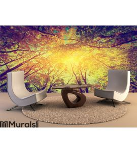 Autumn, fall trees. Sun shining through colorful Wall Mural Wall art Wall decor
