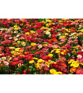 Colorful Gerbera Flowers Wall Mural Wall Tapestry tapestries