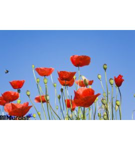 Germany Poppies Blue Sky Copy Space Wall Mural