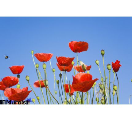 Germany Poppies Blue Sky Copy Space Wall Mural Wall Tapestry tapestries