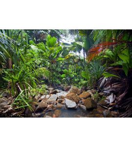 Jungle Landscape Creek Wall Mural