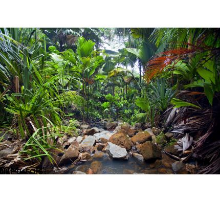 Jungle Landscape Creek Wall Mural Wall art Wall decor
