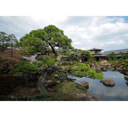 Twisted Pine Tree Pond Zen Garden Wall Mural Wall art Wall decor