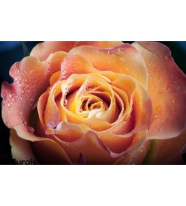Red Orange Rose Flower Wall Mural Wall art Wall decor