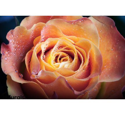 Red Orange Rose Flower Wall Mural Wall art Wall decor