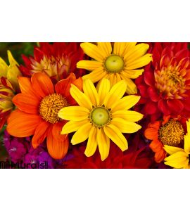 Autumn Flowers Wall Mural Wall art Wall decor