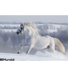 White Welsh Horse Runns Hill Wall Mural