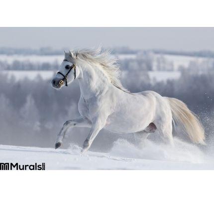 White Welsh Horse Runns Hill Wall Mural Wall art Wall decor