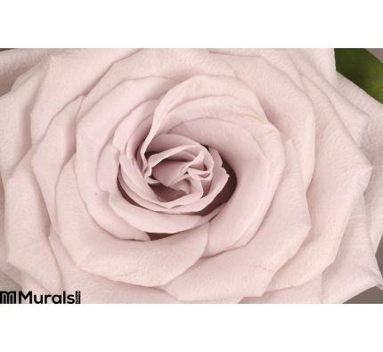Rose Flower Close Up Wall Mural Wall art Wall decor