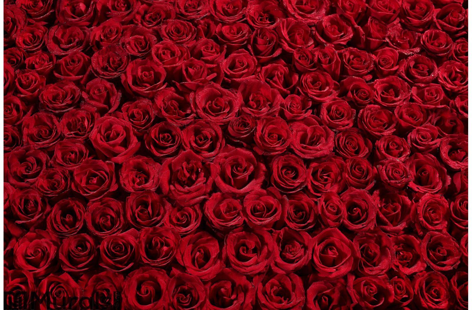 Bed of Roses Wall Mural Wall art Wall decor ...