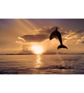 Beautiful Dolphin Jumping Shining Water Wall Mural