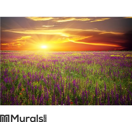 Field with grass, violet flowers and red poppies Wall Mural Wall art Wall decor