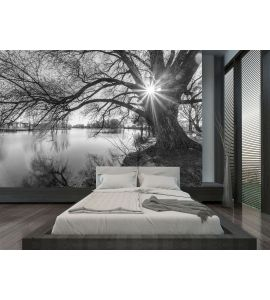 Black White Tree Silhouette Sunrise Time Wall Mural Wall art Wall decor