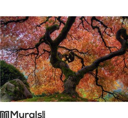 Japanese Maple Tree Wall Mural Wall art Wall decor