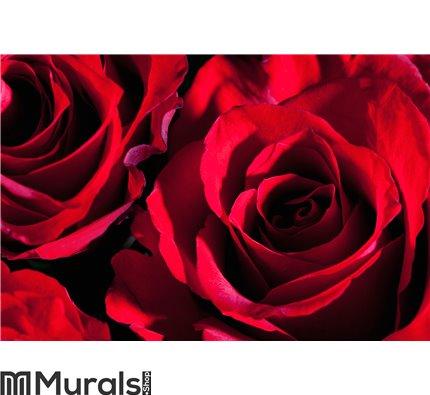 Red roses, close up Wall Mural Wall art Wall decor