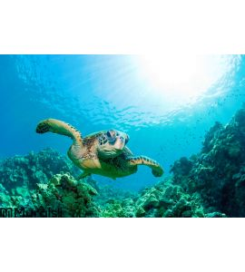 Sea turtle sunburst Wall Mural