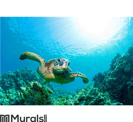 Sea turtle sunburst Wall Mural Wall art Wall decor