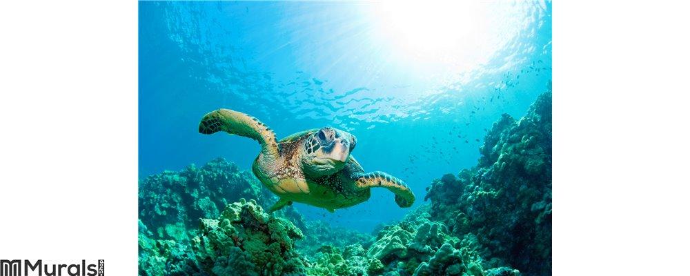 Sea turtle sunburst Wall Mural
