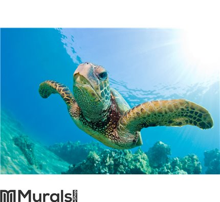 Sea turtle Wall Mural Wall art Wall decor