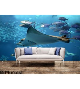 Detail of a manta ray swimming underwater Wall Mural Wall art Wall decor