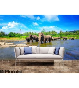 Elephant group in the river Wall Mural Wall art Wall decor
