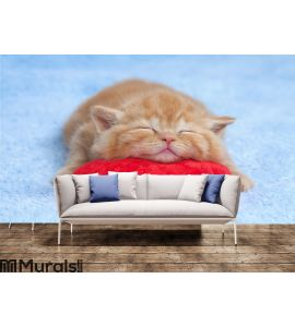 Little cat sleeping on the pillow Wall Mural Wall art Wall decor