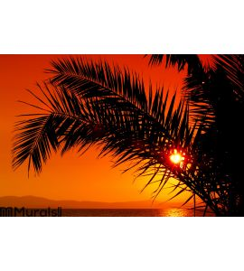 Palm tree during sunset Wall Mural