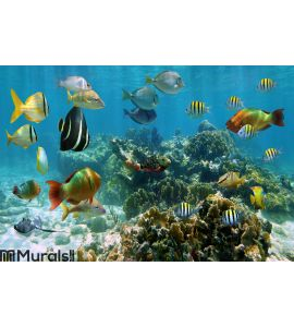 Panorama in a coral reef with shoal of fish Wall Mural