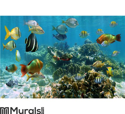 Panorama in a coral reef with shoal of fish Wall Mural Wall art Wall decor