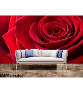 Red rose Wall Mural Wall art Wall decor