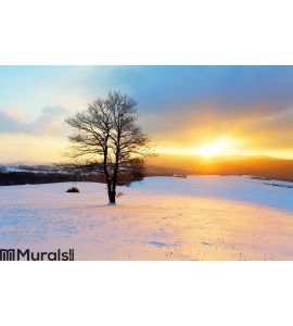 Winter landscape in snow nature Wall Mural